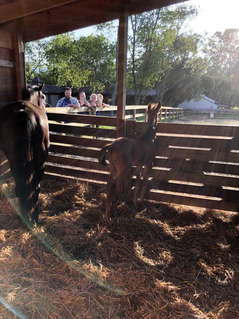 horses greeting us at the farm