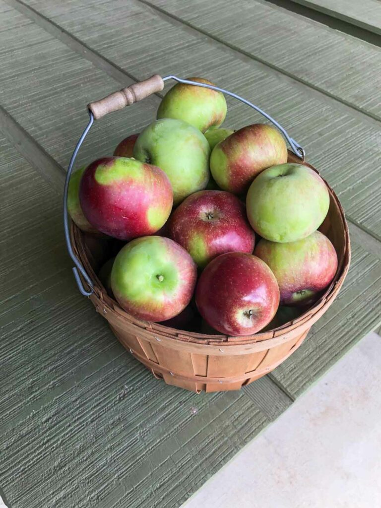 peck of apples from sky top orchard