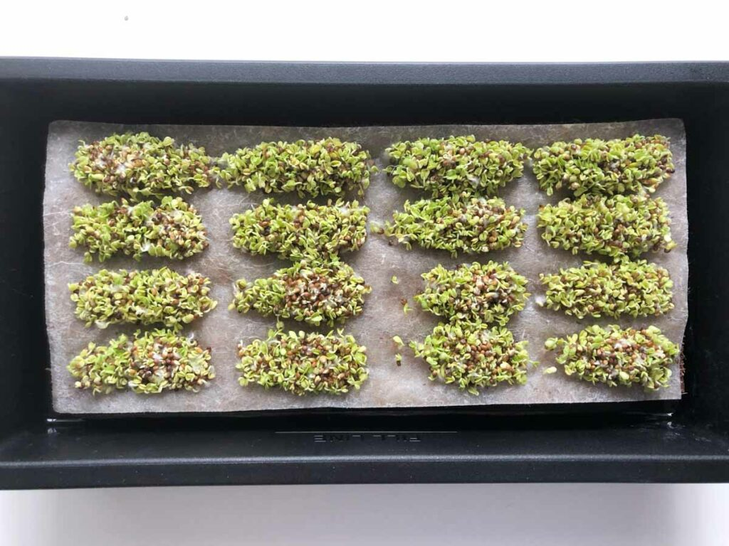 Hamama microgreens sprouts in tray